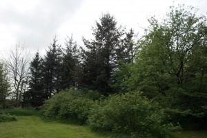 Bærbuske